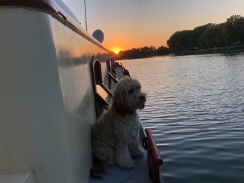 Brody in Courcelles les Lens enjoying the sunset