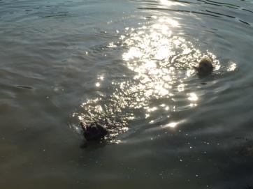 20180718 - B2&B3 swimming02