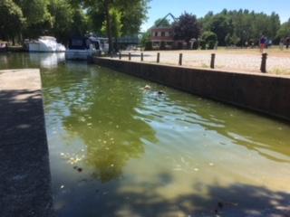 The boys are swimming - again Cambrai