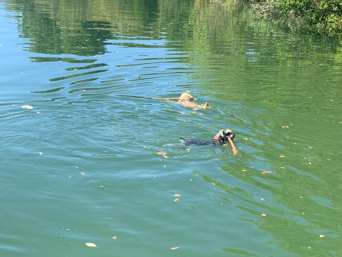 20190810 06 Boys Swimming in The Herault