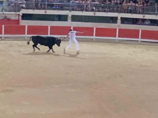 20190822 05 Course Camarguaise Grau du Roi
