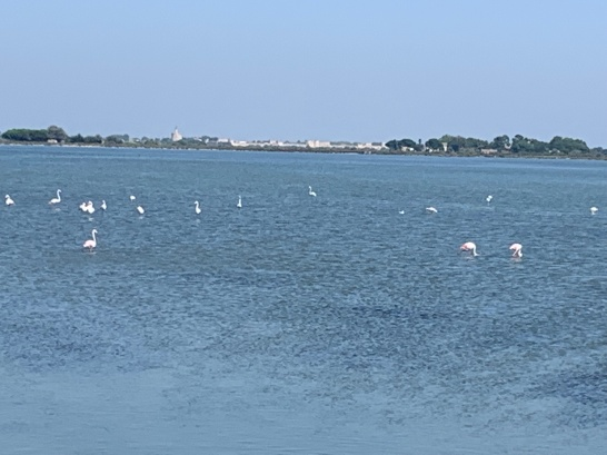20190825 02 Flamingoes