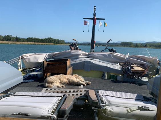 20190902 05a Brody sunbathing