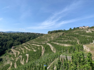 20190914 10 Rhone Vine Terasses