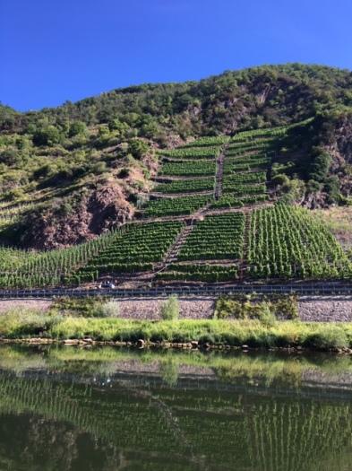 20200730 01 - Steep vineyards